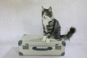 Is mijn koffer al ingepakt?